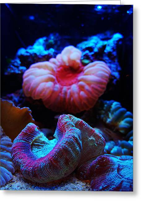 Coral Reef Creatures Greeting Card by Celestial Images