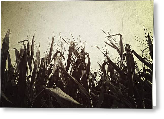 Cornfield Digital Art Greeting Cards - Corn Greeting Card by Natasha Marco