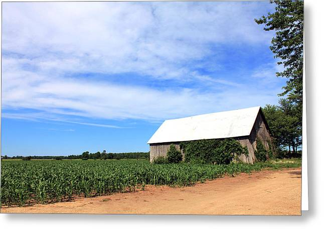 Corn Rows Greeting Card by Sheryl Burns