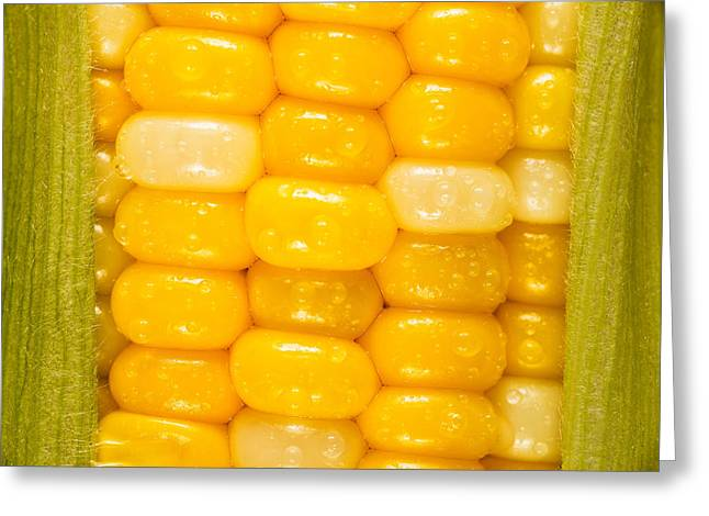 Corn Kernel Greeting Cards - Corn Greeting Card by Steve Gadomski