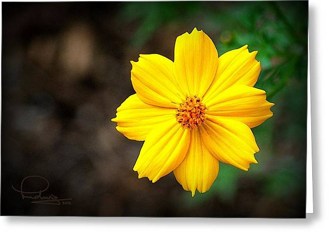 Cafe Art Greeting Cards - Cosmos Flower Greeting Card by Ludwig Keck