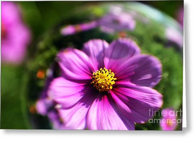 Aster Greeting Cards - Cosmos in a Sphere Greeting Card by Thomas R Fletcher