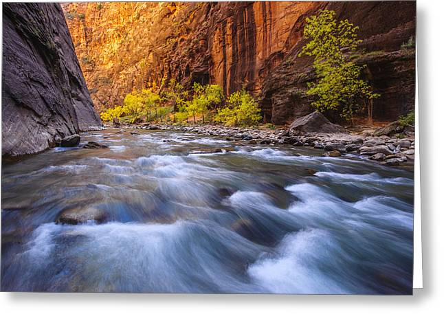 Rushing Water Greeting Cards - Cottonwood Row Greeting Card by Joseph Rossbach
