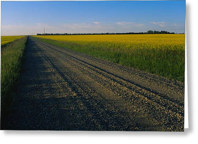 Country Road Passing Through A Field Greeting Card by Panoramic Images