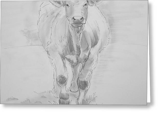 Cow Drawing Greeting Card by Mike Jory