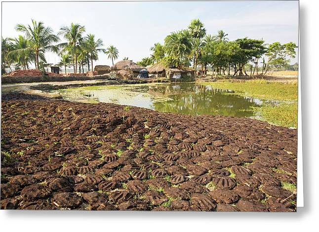 Cow Dung Belonging To Subsistence Farmers Greeting Card by Ashley Cooper