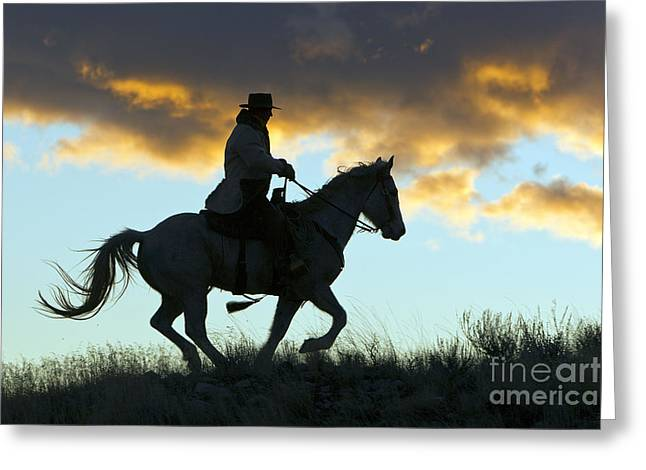 Quarter Horses Photographs Greeting Cards - Cowboy Silhouette Greeting Card by M. Watson