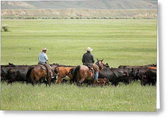 Cowboys Herding On A Cattle Ranch Greeting Card by Jim West