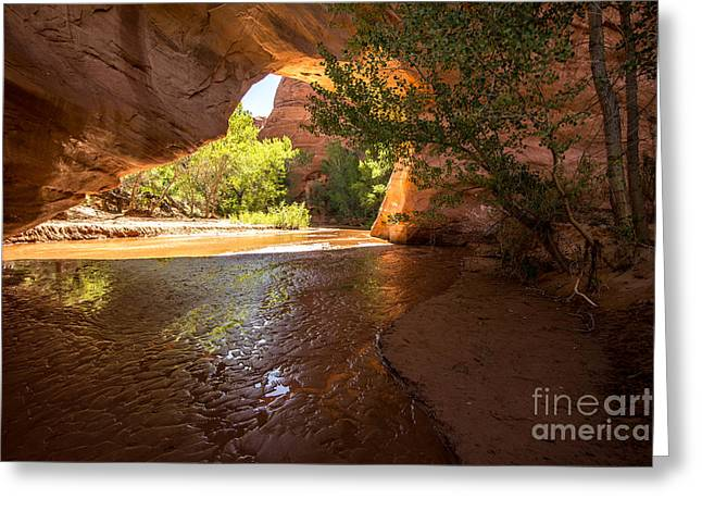 Holes In Sandstone Greeting Cards - Coyote Natural Bridge - Coyote Gulch - Utah Greeting Card by Gary Whitton