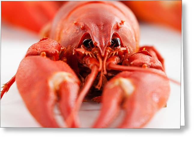 Red Claws Greeting Cards - Crawfish Greeting Card by Kati Molin