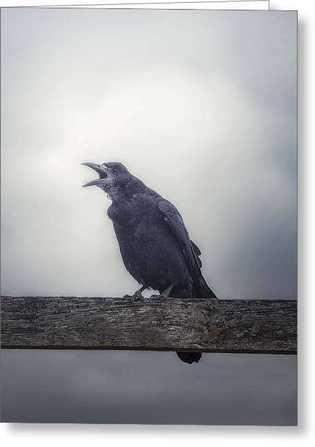 Bleak Greeting Cards - Crow Greeting Card by Joana Kruse