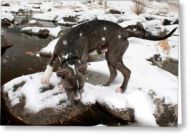 Dogs In Snow. Greeting Cards - Crush in the Snow Greeting Card by Eric Martin