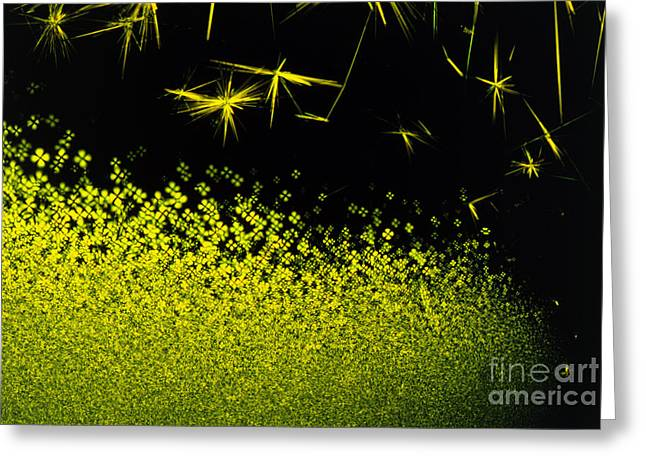 Antibiotic Greeting Cards - Crystals Of Antibiotic Tetracycline Greeting Card by David Parker