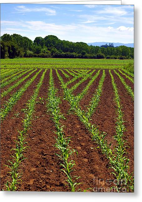 Fertilize Greeting Cards - Cultivated Land Greeting Card by Carlos Caetano