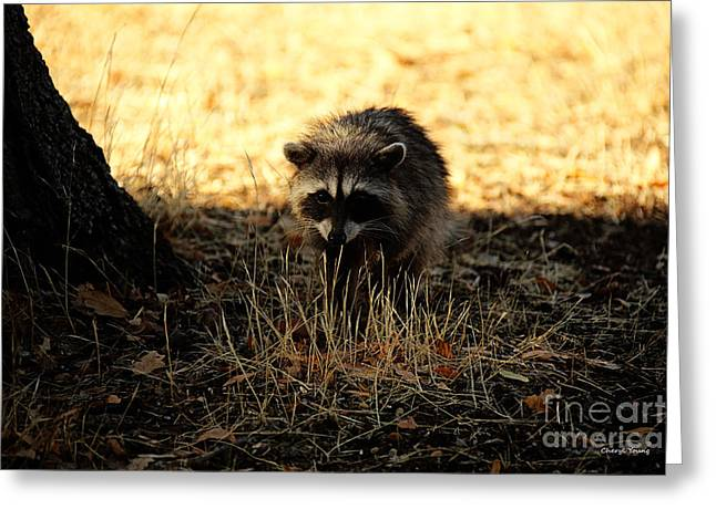 Sly Greeting Cards - Curious Greeting Card by Cheryl Young