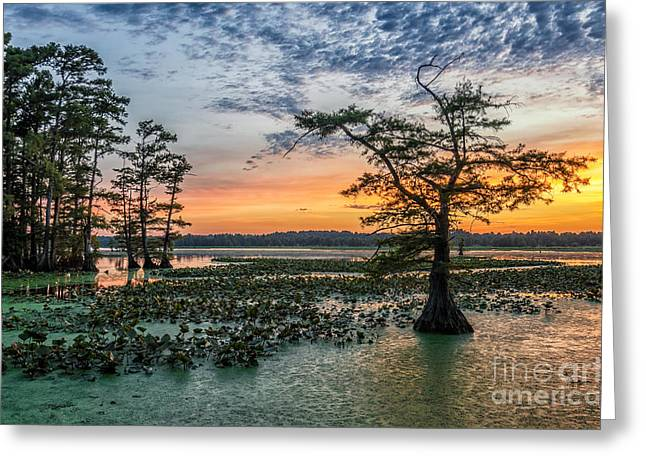 Lilly Pads Greeting Cards - Cypress dreams Greeting Card by Anthony Heflin