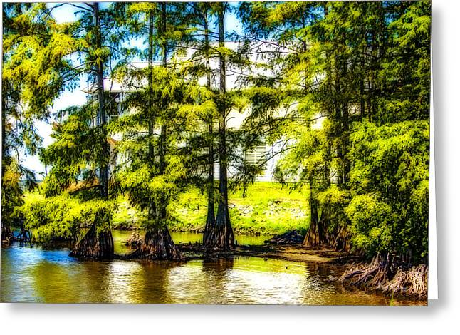Tree Roots Art Giclee Greeting Cards - Cypress Point Greeting Card by Barry Jones