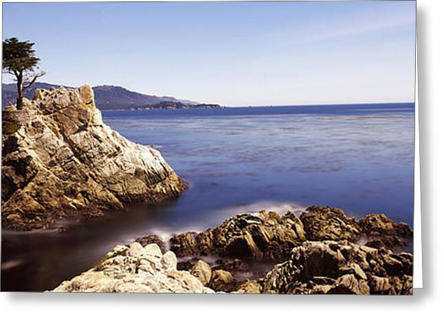 Scenic Drive Greeting Cards - Cypress Tree At The Coast, The Lone Greeting Card by Panoramic Images