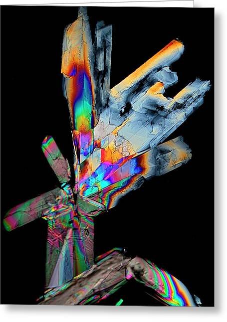 Cysteine Crystals Greeting Card by Antonio Romero