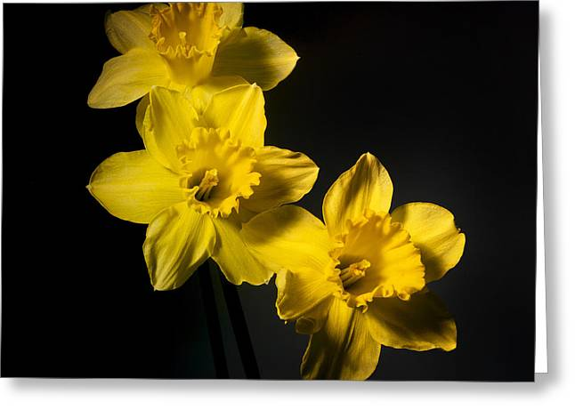 Fragility Photographs Greeting Cards - Daffodils Greeting Card by Bernard Jaubert