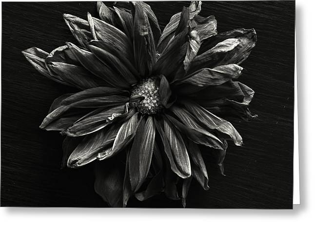 Dahlia Greeting Cards - Dahlia Greeting Card by HD Connelly