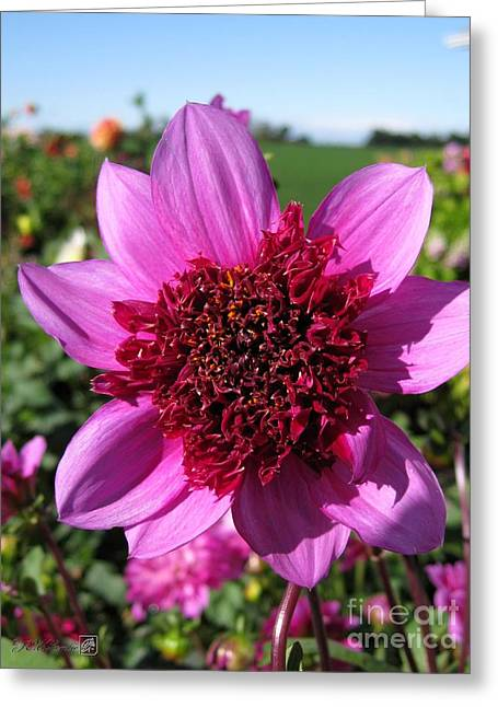 Powder Greeting Cards - Dahlia named Blue Bayou Greeting Card by J McCombie