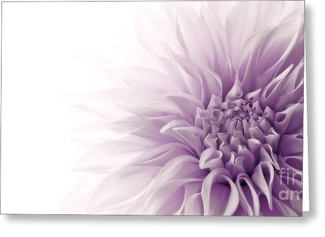 Close Up Floral Greeting Cards - Dahlia Greeting Card by Priska Wettstein