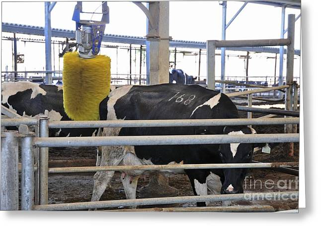 Automation Greeting Cards - Dairy Farm Greeting Card by PhotoStock-Israel