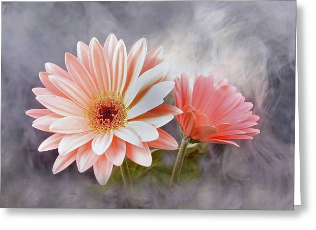 Leaf Frog Greeting Cards - Daisies Greeting Card by Manfred Lutzius