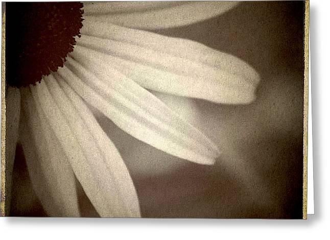 Laura Carter Greeting Cards - Daisy Photograph Black and White Greeting Card by Laura  Carter
