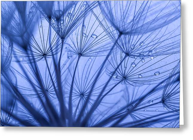 Weed Line Greeting Cards - Dandelion Art Greeting Card by Vishwanath Bhat