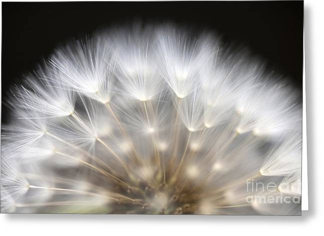 Wishes Greeting Cards - Dandelion Greeting Card by Jim Corwin