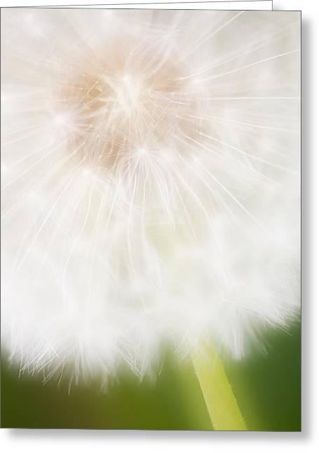 Dandelion Seedhead Noord-holland Greeting Card by Mart Smit