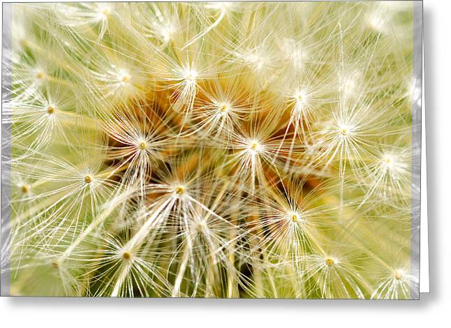 Spring Scenes Mixed Media Greeting Cards - Dandelion Greeting Card by Toppart Sweden