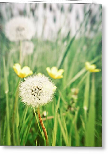 Querformat Greeting Cards - Dandelions and buttercups Greeting Card by Tom Gowanlock