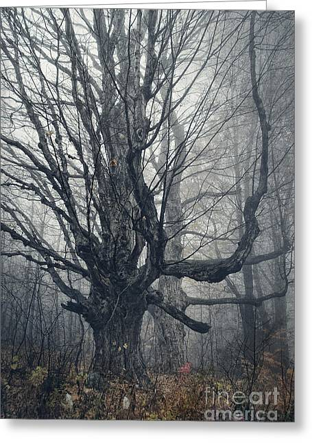 Bare Tree Photographs Greeting Cards - Dark Forest Greeting Card by HD Connelly