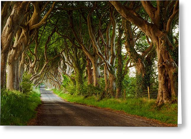 Ballymoney Greeting Cards - Dark Hedges  Northern Ireland Greeting Card by Przemyslaw Zdrojewski