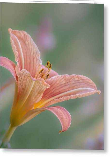 Enhanced Greeting Cards - Day Lily Greeting Card by Angie Vogel