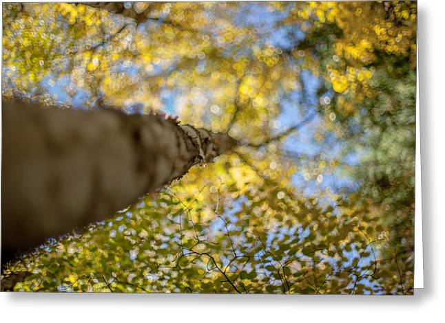 Daydreaming Greeting Card by Aaron Aldrich