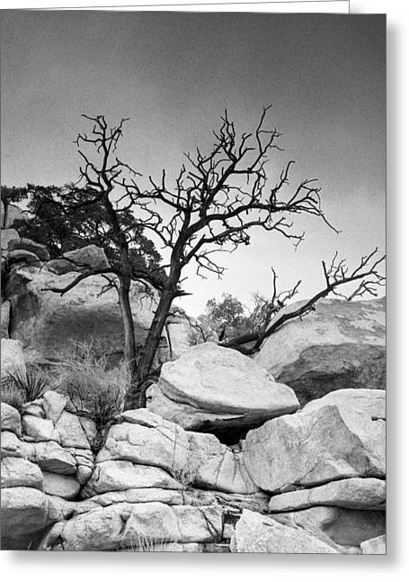 Square Format Greeting Cards - Dead Tree Greeting Card by Alex Snay