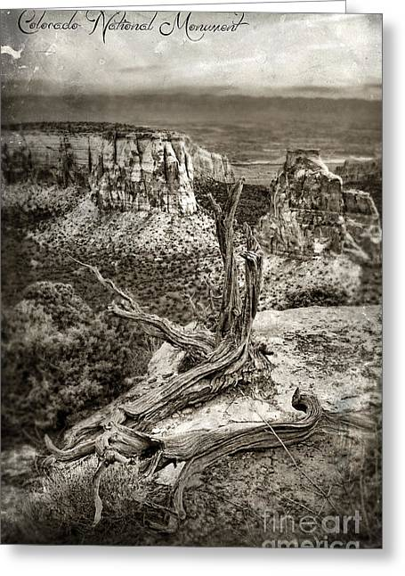 Ledge Photographs Greeting Cards - Dead Tree on Cliff Overlooking View of Buttes Greeting Card by Jill Battaglia