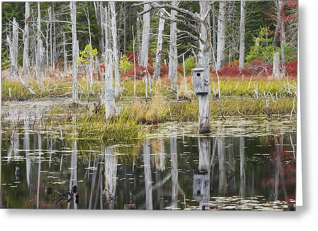 Maine Landscape Greeting Cards - Dead Trees Reflecting On A Maine Beaver Pond Greeting Card by Keith Webber Jr