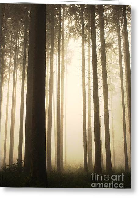 Drab Greeting Cards - Deep Forest Greeting Card by Jana Behr