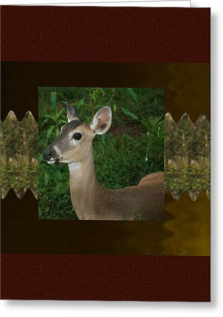 Costa Mixed Media Greeting Cards - Deer Wild Animal portrait for Wild Life Fan from NavinJoshi Costa Rica collection Greeting Card by Navin Joshi