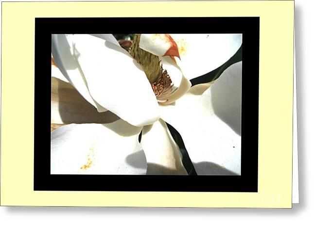 Amazing Greeting Cards - Delicate Flower Greeting Card by Oksana Semenchenko