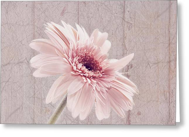 Textured Floral Greeting Cards - Delightful Greeting Card by Kim Hojnacki