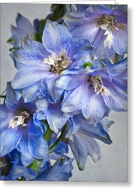 Delphinium Greeting Cards - Delphinium VIII Greeting Card by David and Carol Kelly