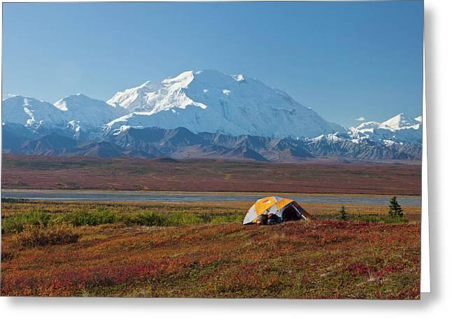 Denali National Park, Alaska, Mt Greeting Card by Hugh Rose