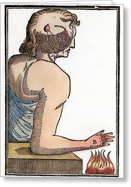 Reflex Greeting Cards - Descartes: Reflex, 1664 Greeting Card by Granger