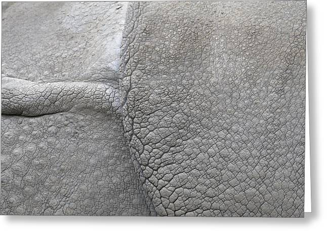 Rhinoceros Unicornis Greeting Cards - detail of the skin of an Indian rhinoceros in a zoo Netherlands Greeting Card by Ronald Jansen